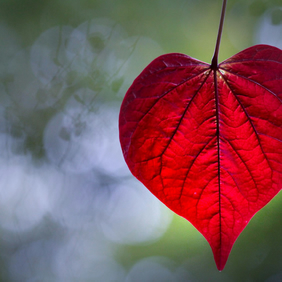 Love naturally (greeting card featuring a photo of a heart shaped leaf)