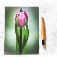 Reaching up (tulip photo greeting card, birthday card, Mother's Day card)