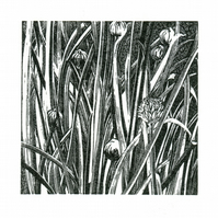 Wood Engraving 'Chives'