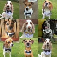Made to order, custom dog bowtie bandana, personalise with bows and size etc.