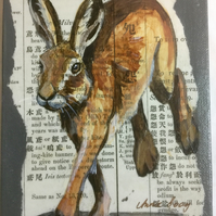The Bay Hare