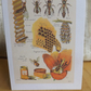 Vintage Study.Bees. Quality card with envelope. Collect them all!