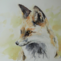 Curious Fox, Original Watercolour Painting.