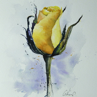 Rose, Original Watercolour Painting.