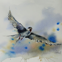 Arctic Tern, Original Watercolour Painting.
