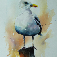 Seagull, Original Watercolour Painting.