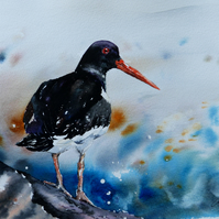 Oystercatcher, Original Watercolour Painting.