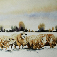 Four Sheep, Original Watercolour Painting.