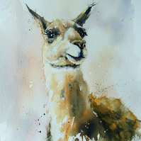 Llama, Original Watercolour Painting.