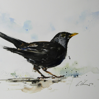 Blackbird, Original Watercolour Painting.