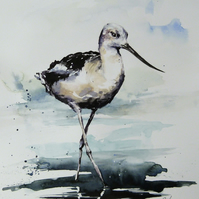 Avocet, Framed Original Watercolour Painting.