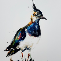 Lapwing, Original Watercolour Painting.