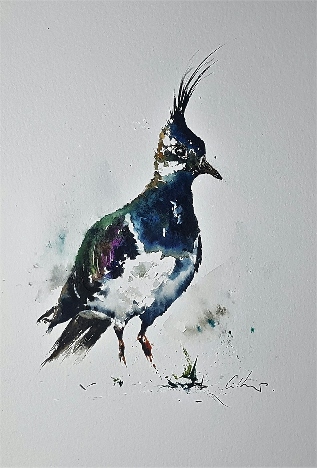 A Lapwing, Original Watercolour Painting.