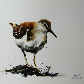 Common Sandpiper, Original Watercolour Painting.
