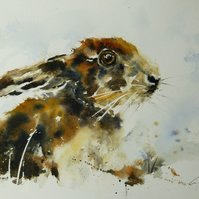 Young Hare, Original Watercolour Painting.
