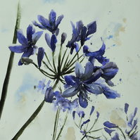 Agapanthus, Original Watercolour Painting.