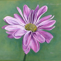 Original Pink Chrysanthemum Art Acrylic Painting on Stretched Canvas