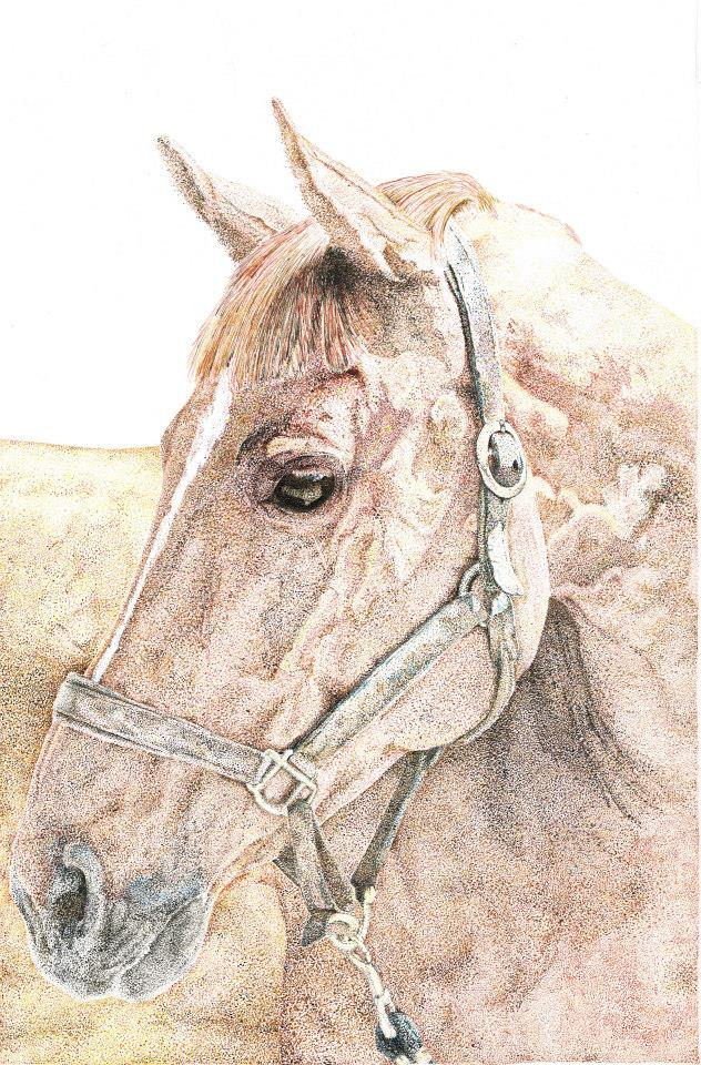 Custom Pet & Equine Portrait Vouchers ( colour portrait)