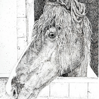JayB-Artworks Gift voucher for an A4 black and white pet or equine portrait