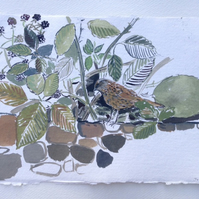 Blackberries and Dunnock (gouache painting)