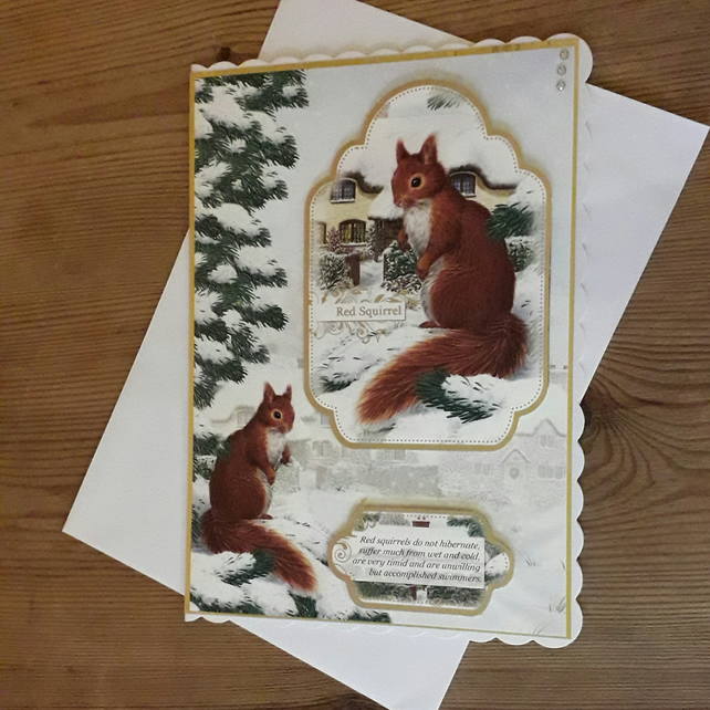 Luxurious Red Squirrel Christmas Card
