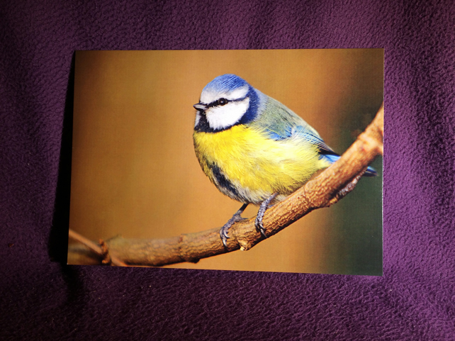 A5 Blue Tit Greetings Card
