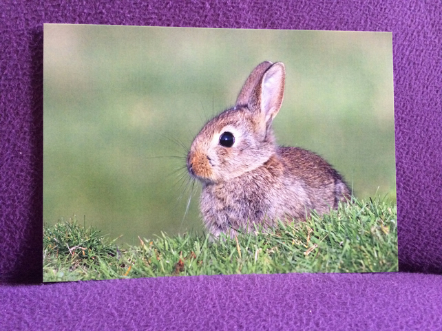 A5 Rabbit Greetings Card.
