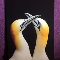A5 Gannets greetings card.