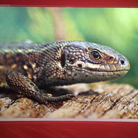 Common Lizard Greetings Card.