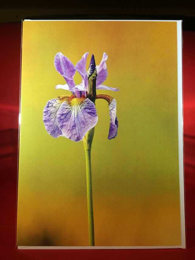 Flag Iris Greetings Card.
