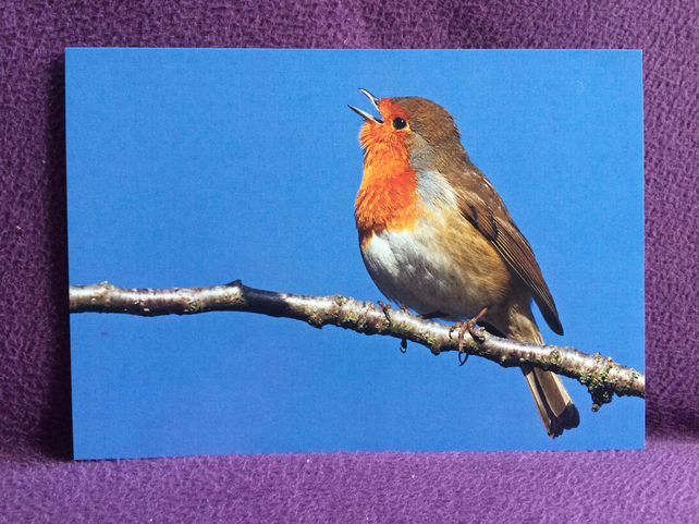 A5 Robbin Greetings card.
