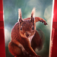 A5 funny red squirrel greetings card.