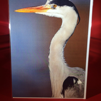 A5 Heron Greetings Card.