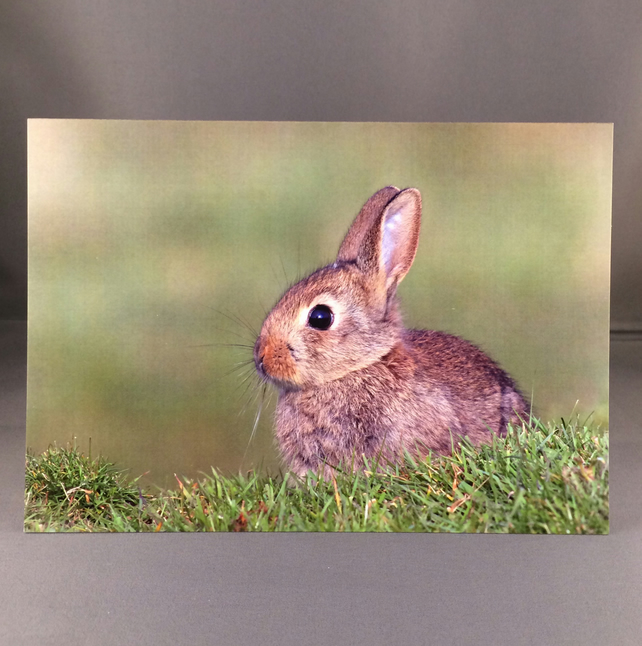 Rabbit greetings card. R1