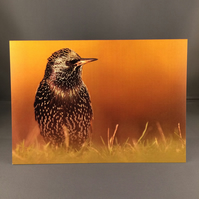 Starling greetings card st2