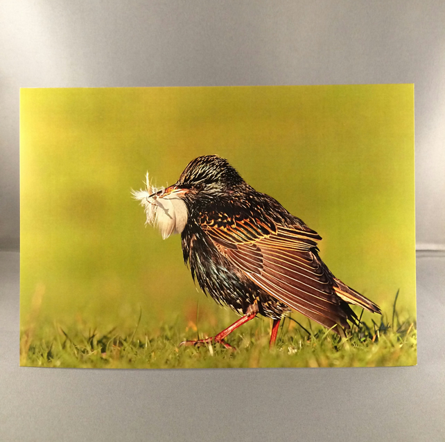 Starling greetings card st1