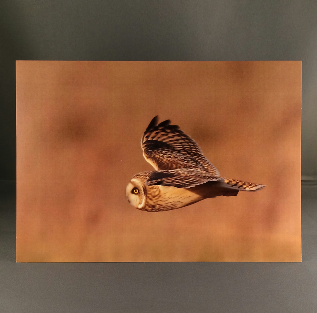 Short eared owl greetings card seo4