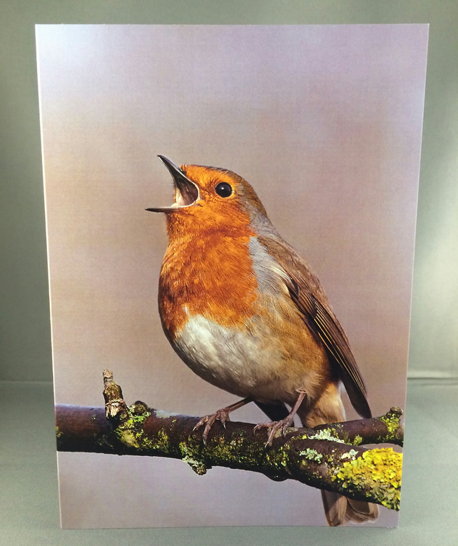 Robin red breast greetings card.