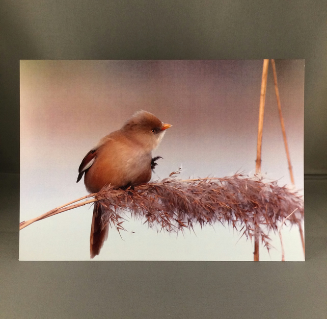 Bearded tit greetings card. Bt1