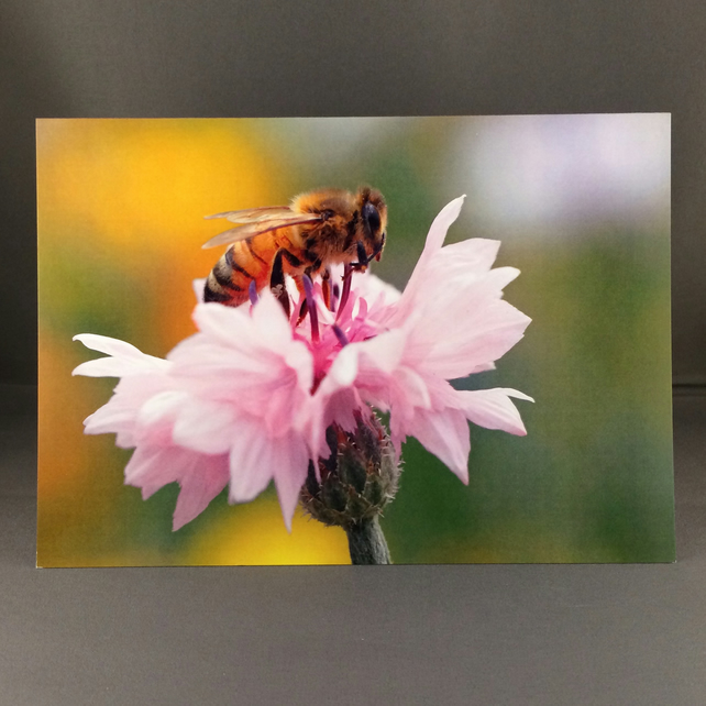 Honey bee greetings card.