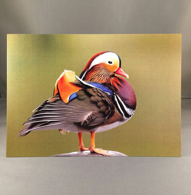 Male mandarin duck greetings card.