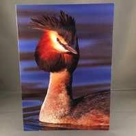 Great crested grebe greetings card.