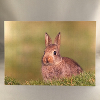 Rabbit greetings card. R2