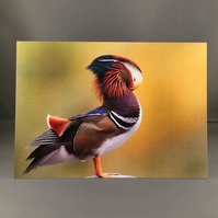Preening mandarin duck greetings card.
