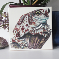 Amazon Milk Frog Design Ceramic Tile Trivet with Cork Backing