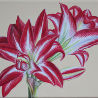 Amaryllis Acrylic Painting on Stretched Canvas - Ready to Hang