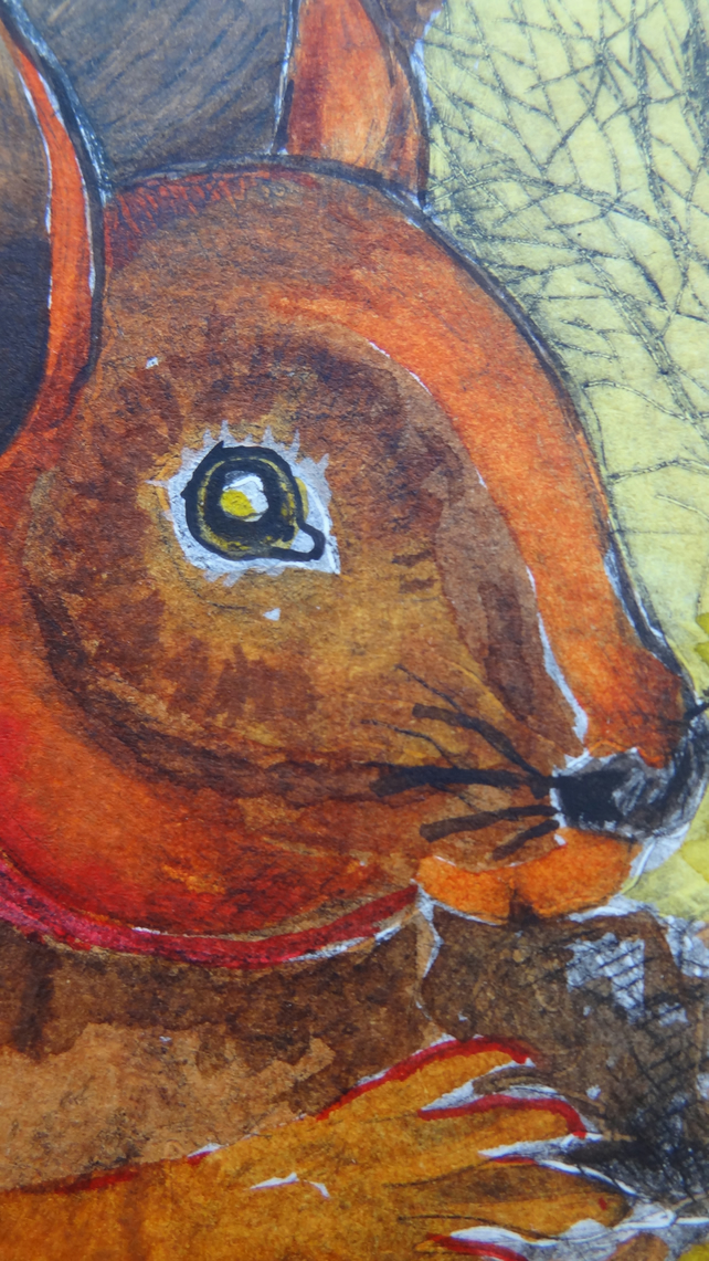 Red squirrel - Original Hand Coloured Etching