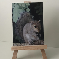 "ACEO Print - Grey Squirrel - ""Time for a snack"""