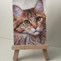 "ACEO Print - Maine Coon Cat - ""Who Me?"""