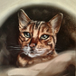 Custom pet portrait commission from your own photos 8 x 8 inch oil painting cat